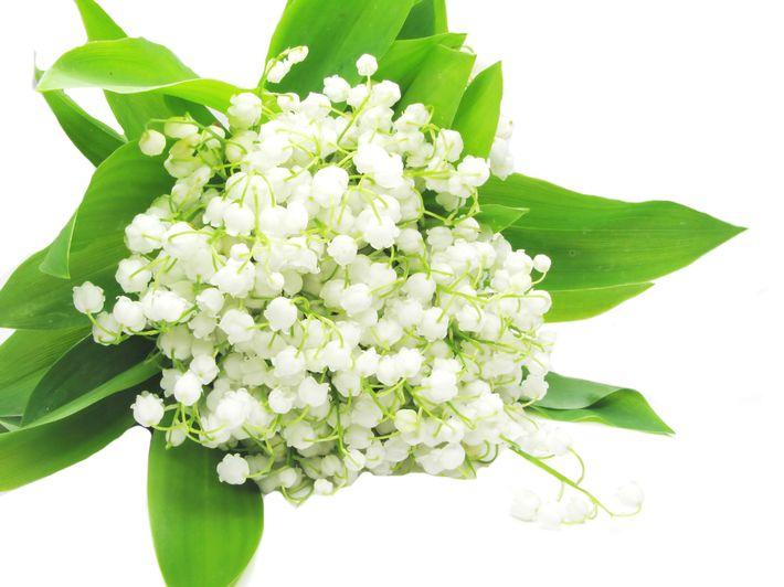 цветы ландыша