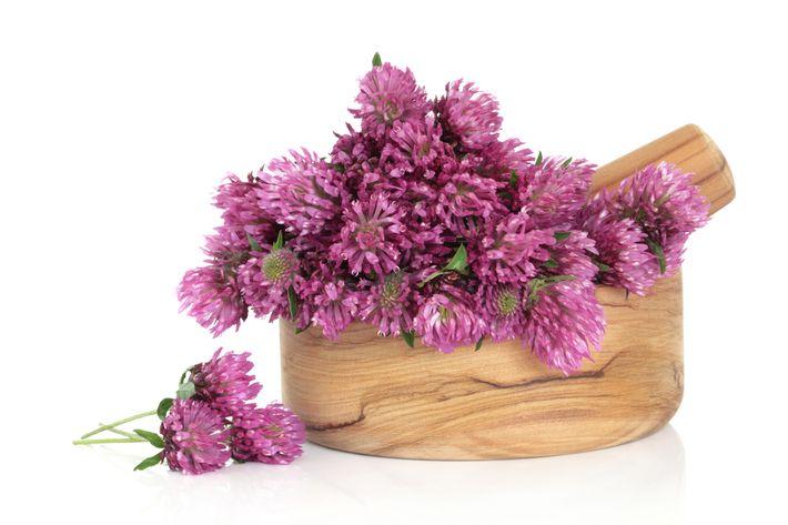 цветки лугового клевера